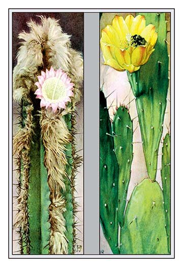 Buyenlarge Cactus Flowers 2 Piece Graphic Art Set Wayfair