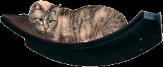Cat Perches