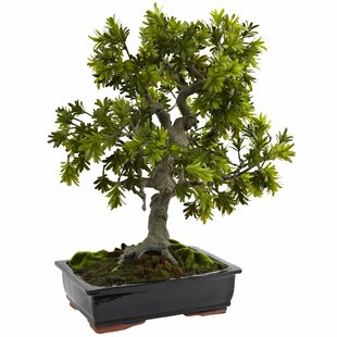 Artificial Bonsai Trees Wayfair