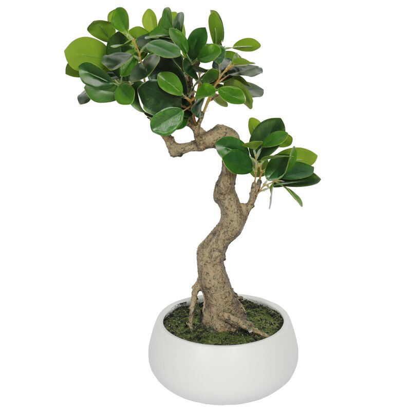 Bloomsbury Market 15 5 Artificial Bonsai Tree In Planter Reviews Wayfair