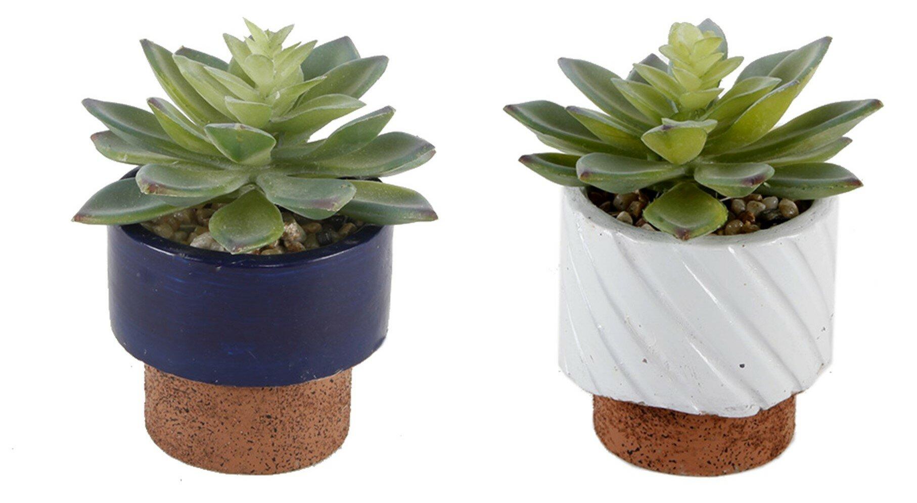 Wrought Studio 2 Piece Navy Reverse Desktop Succulent Plant In Pot Reviews Wayfair