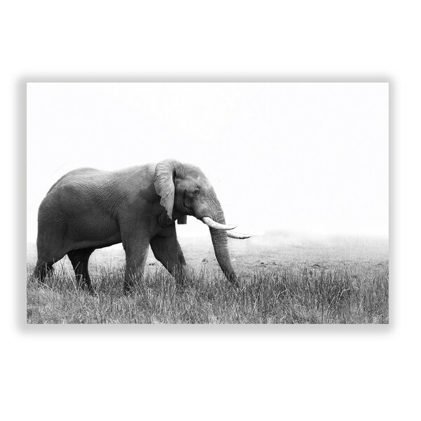 Two Palms Art Bazaar 'roaming Elephant' Photographic Print & Reviews by Two Palms Art Bazaar