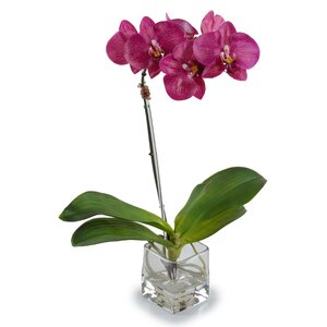 Small Faux Phalaenopsis Orchid