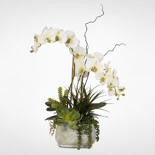 Phalaenopsis Silk Orchid with Succulents Floral Arrangement in Ceramic Pot