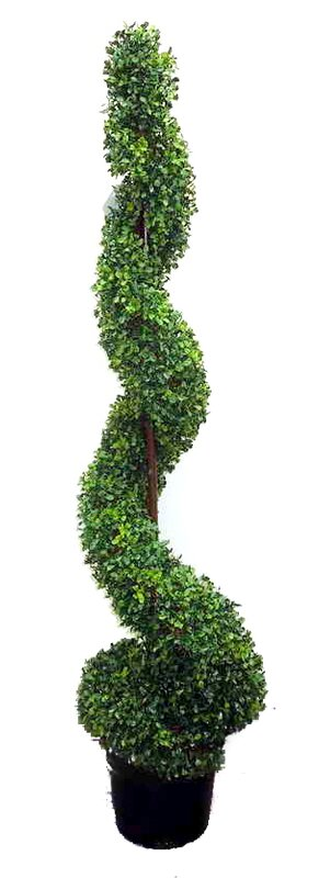 Ophelia Co Spiral Floor Boxwood Topiary In Pot Reviews
