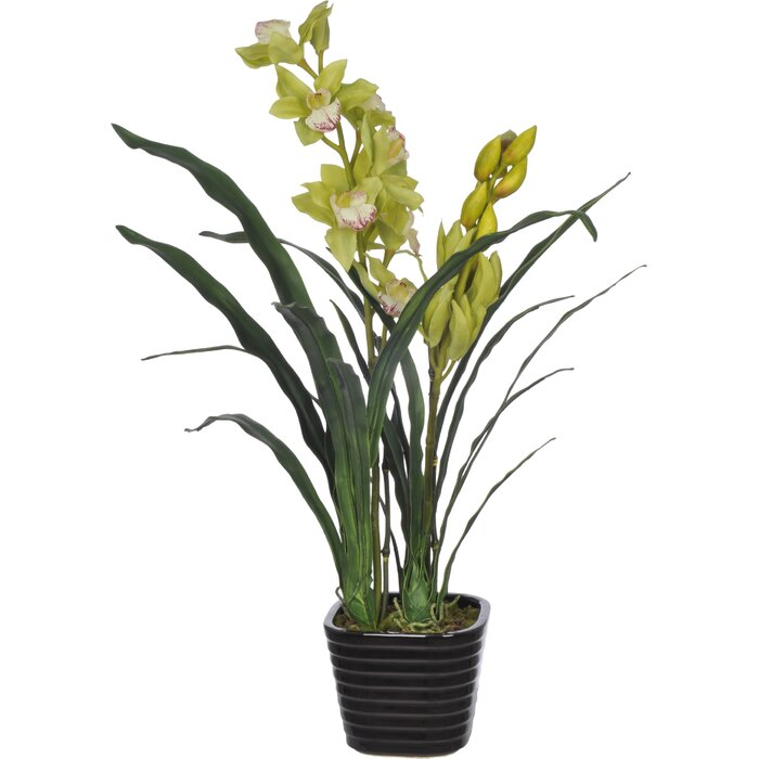 225 & Faux Green Cymbidium Orchid Flower in Vase