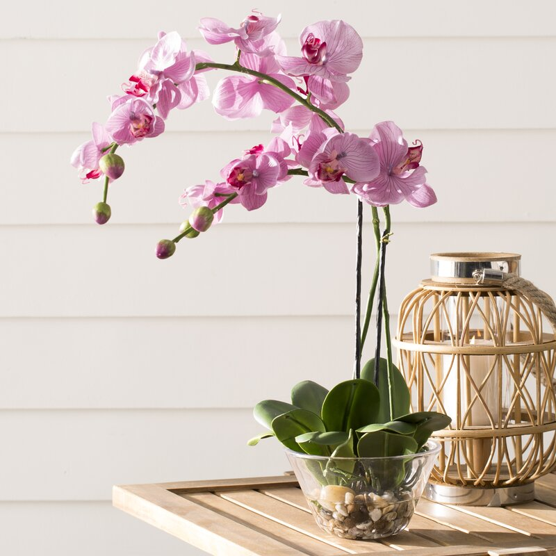 World Menagerie Orchid With Glass Vase Reviews Wayfair