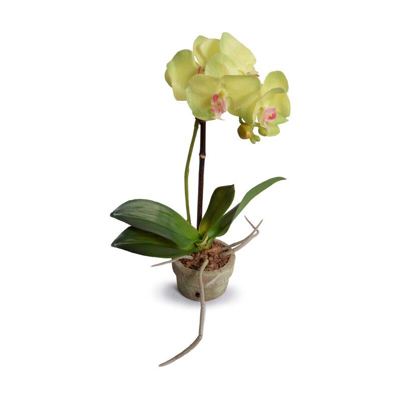 floral home decor orchid floral design wayfair.htm mercer41 faux orchids floral arrangement in pot wayfair  faux orchids floral arrangement in pot
