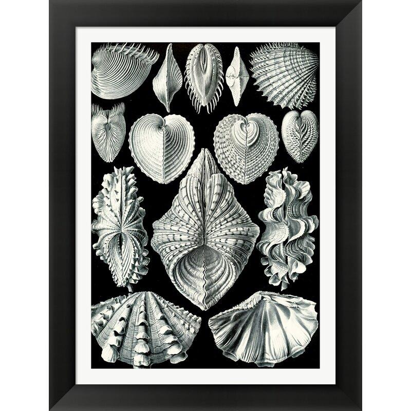 Evive Designs Vintage Seashells Iv By Julia Kearney Framed Graphic Art Wayfair