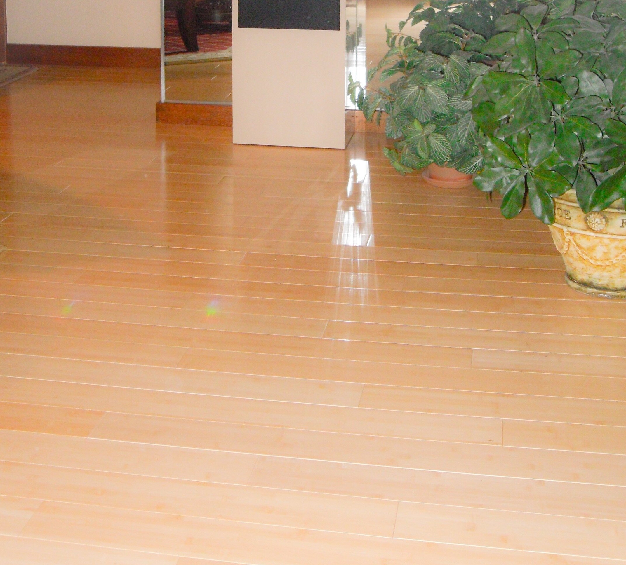 Bamboo Flooring Choice Image Floor Design Ideas