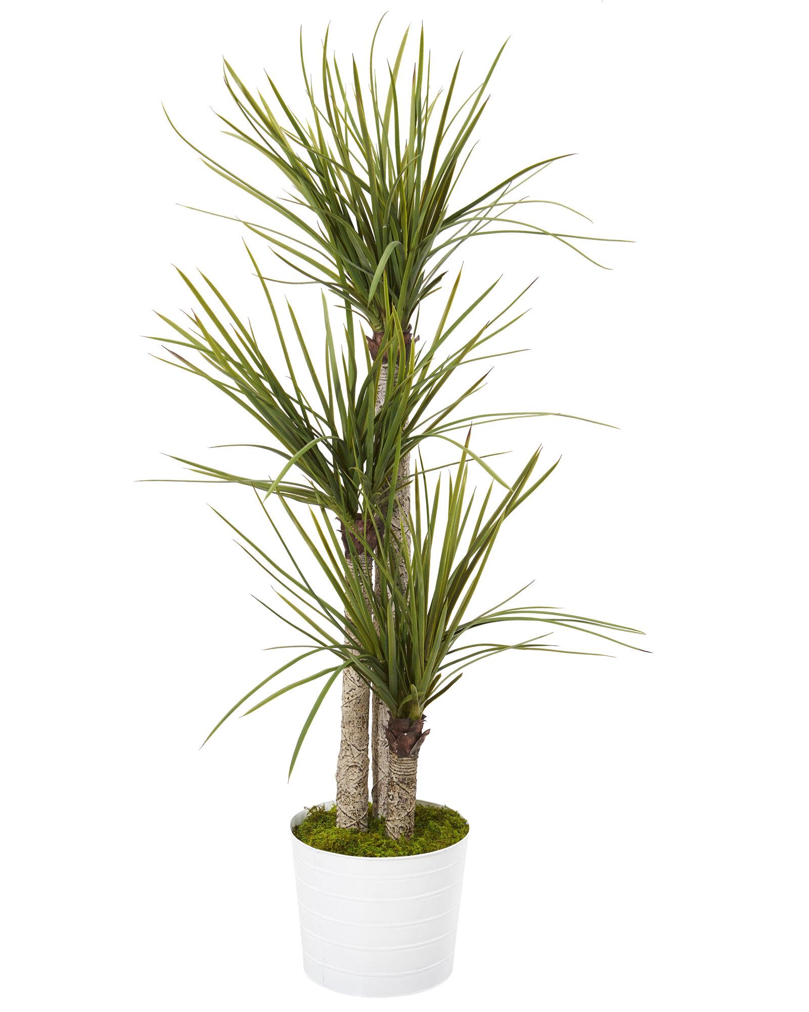 Primrue 46 Artificial Yucca Tree In Planter Wayfair