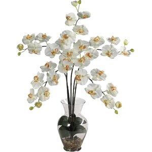 Liquid Illusion Phalaenopsis Silk Orchid Arrangement in Cream
