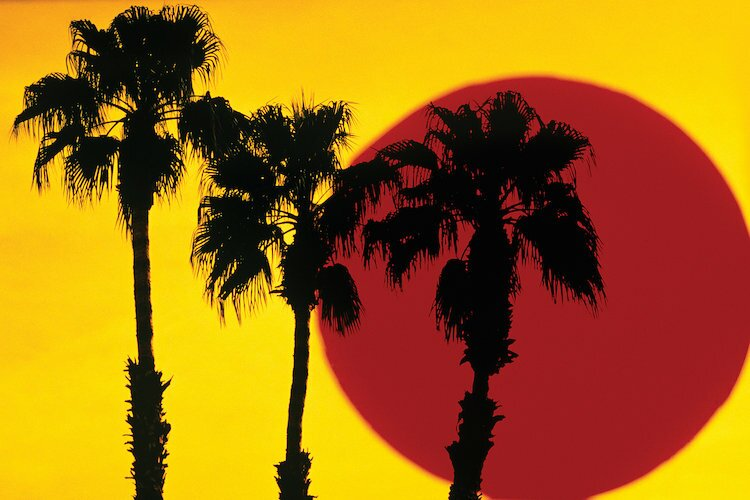 east urban home 1990s 3 silhouetted palm trees against yellow sky