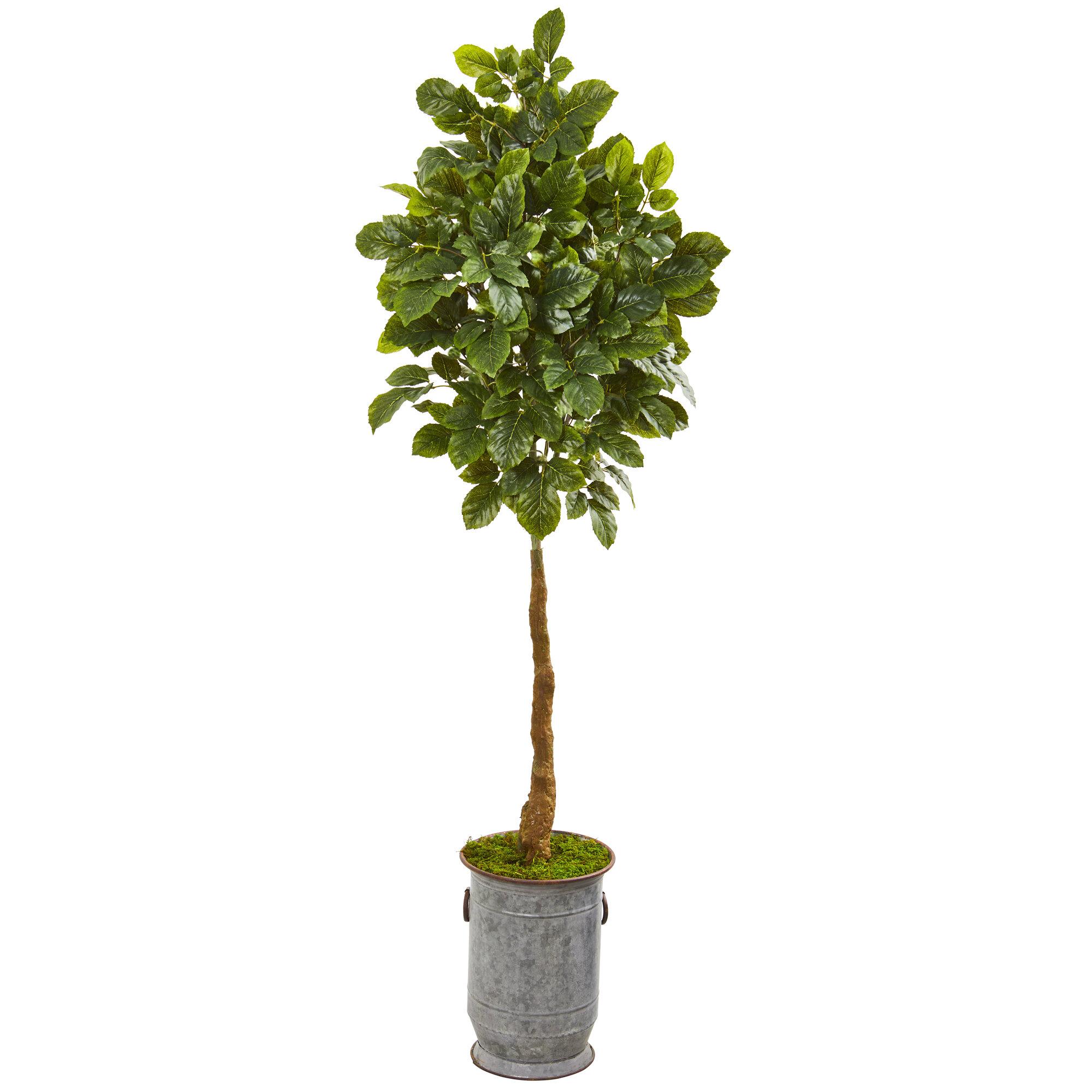 Charlton Home Artificial Beech Leaf Tree In Planter Wayfair