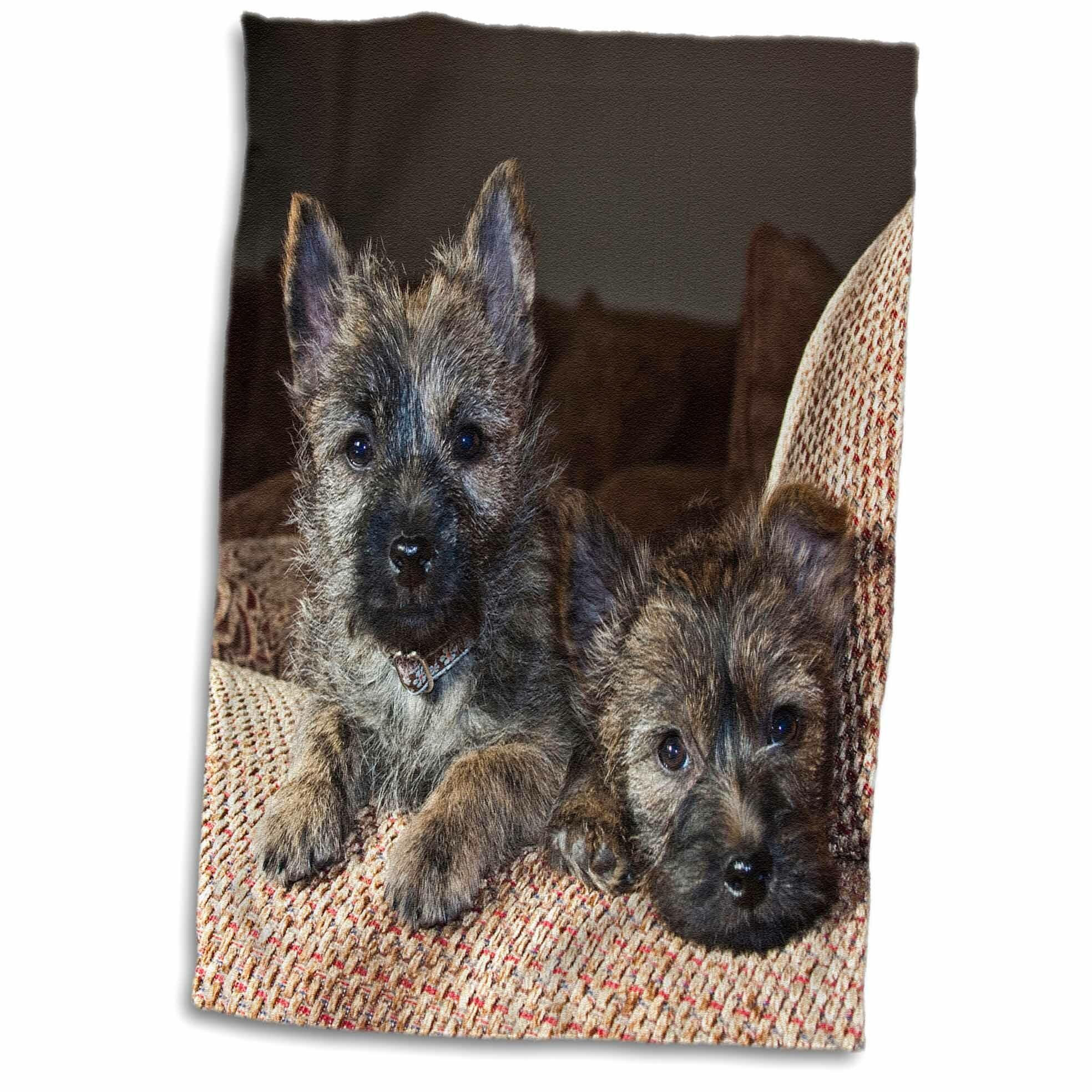Symple Stuff Buckland Two Cairn Terrier Dogs On A Couch Hand Towel Wayfair