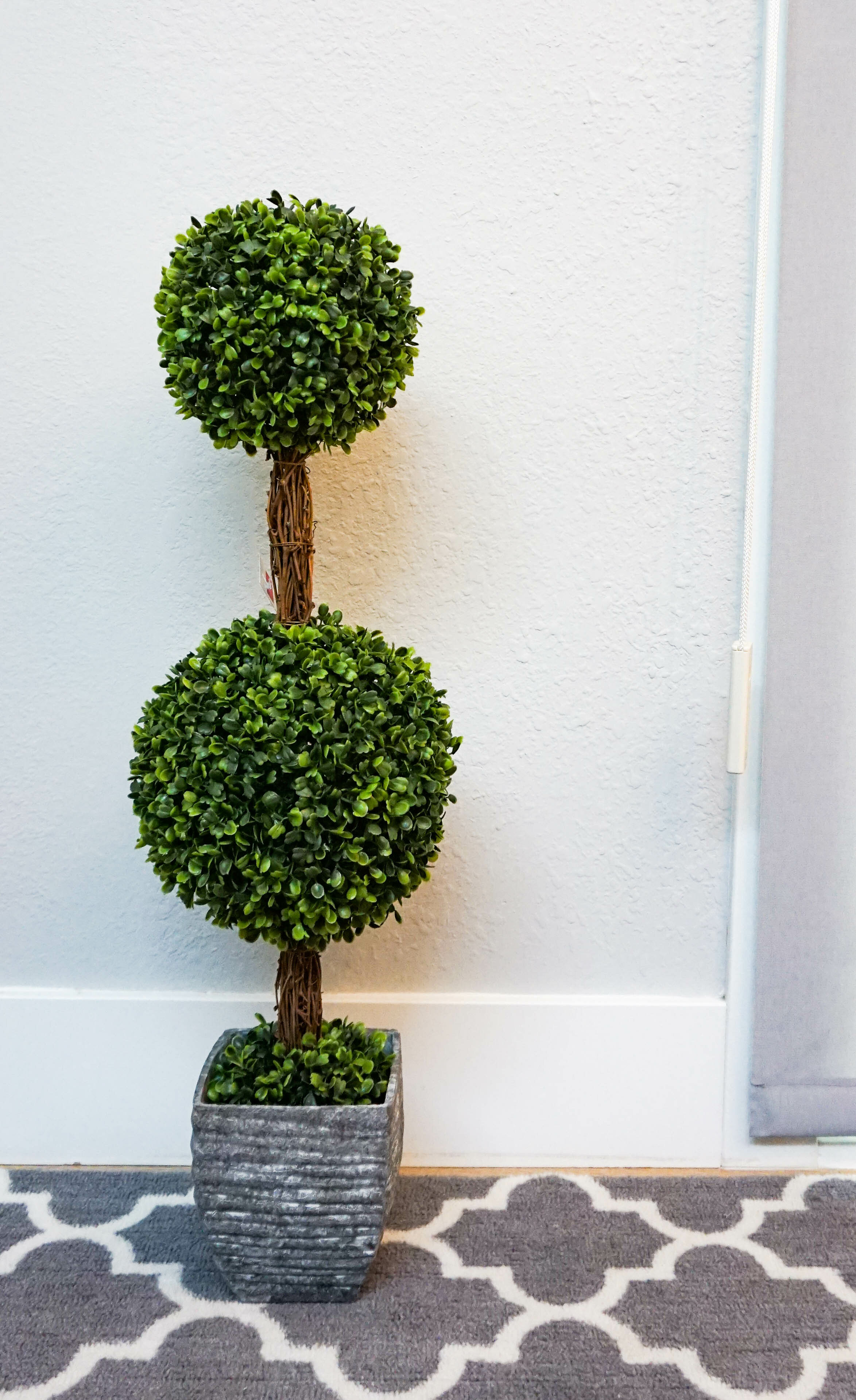 Ophelia Co Desktop Double Ball Shaped Boxwood Topiary In Pot Reviews Wayfair