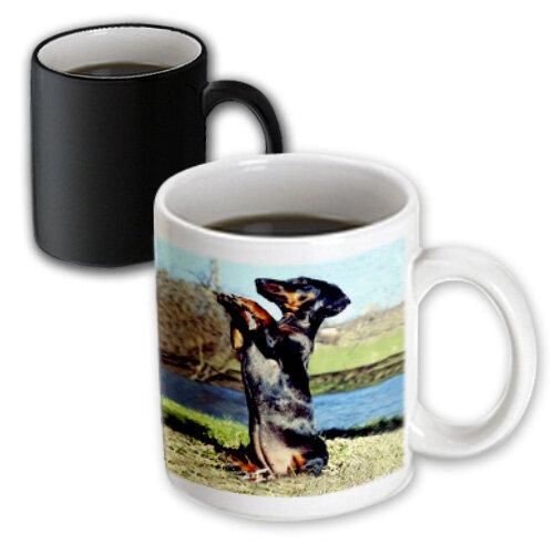 3drose Dapple Dachshund Coffee Mug Wayfair