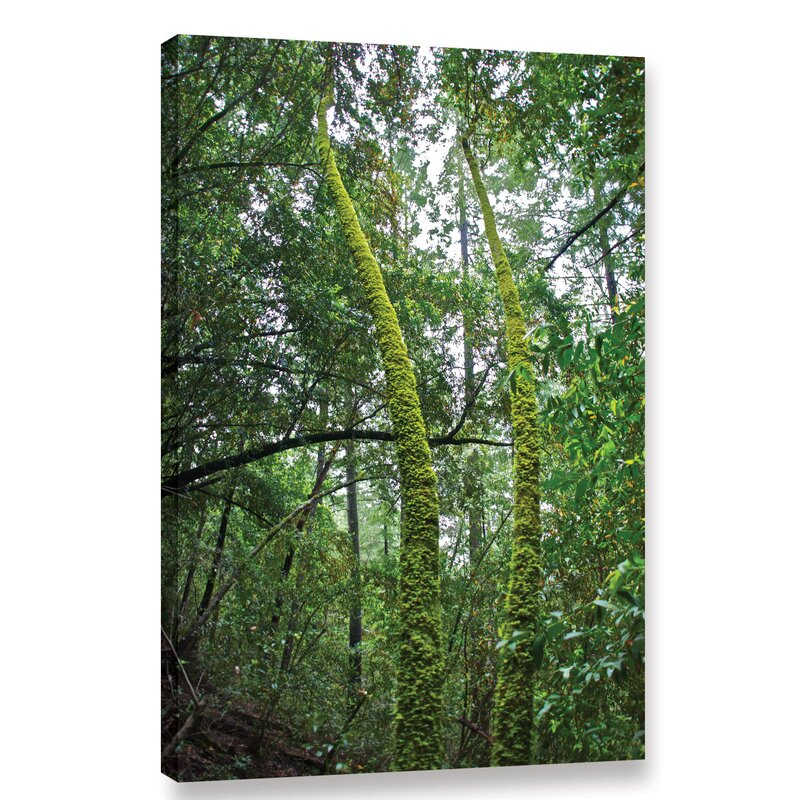Millwood Pines Green Trees By Dan Wilson Wrapped Canvas Photograph Print Wayfair