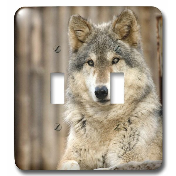 Wolf, Folsom City Zoo, California 2-Gang Toggle Light Switch Wall Plate by 3dRose