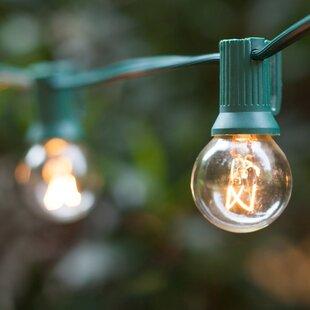 50 ft. 33-Light Globe String Light by Wintergreen Lighting