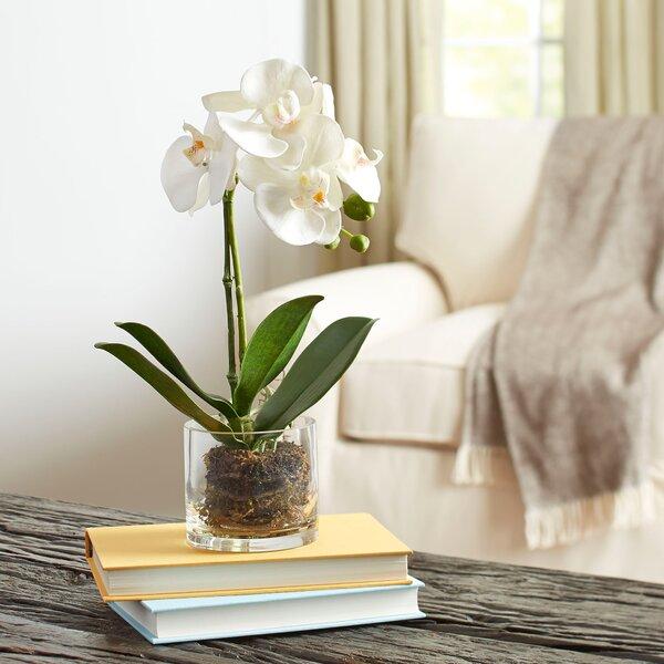 Birch Lane Faux Orchid In Glass Vase Reviews Birch Lane