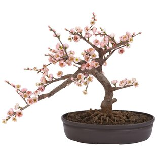 Faux bonsai tree wayfair blossom bonsai tree in pot mightylinksfo
