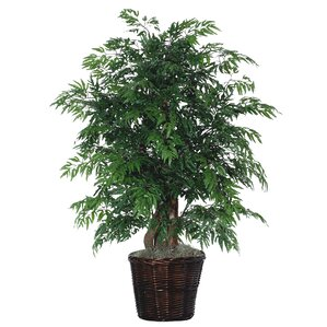 artificial potted natural ming aralia tree in pot - Silk Trees