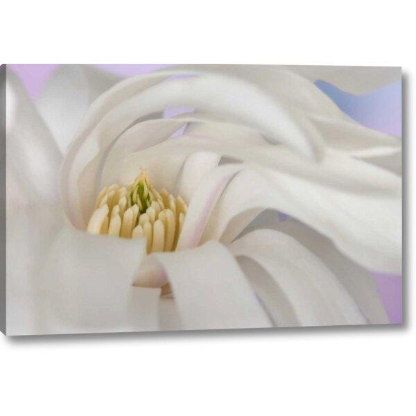 Winston Porter Detail Of Star Magnolia Flower