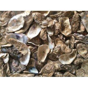 Oyster Shell Wall Art Wayfair