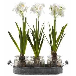 Faux paperwhites wayfair paperwhite bulbs in glass jars oval metal tray set set of 3 mightylinksfo