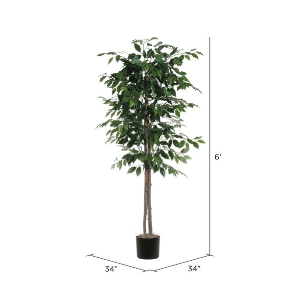 Alcott Hill Berry Ficus Tree In Pot Reviews Wayfair