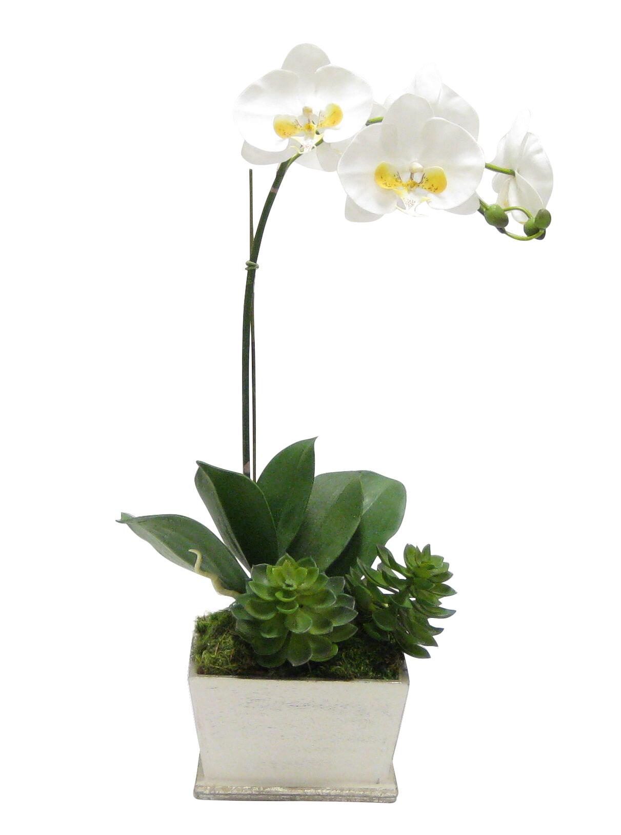Bougainvillea Phalaenopsis Orchid Floral Arrangement In Planter Reviews Perigold
