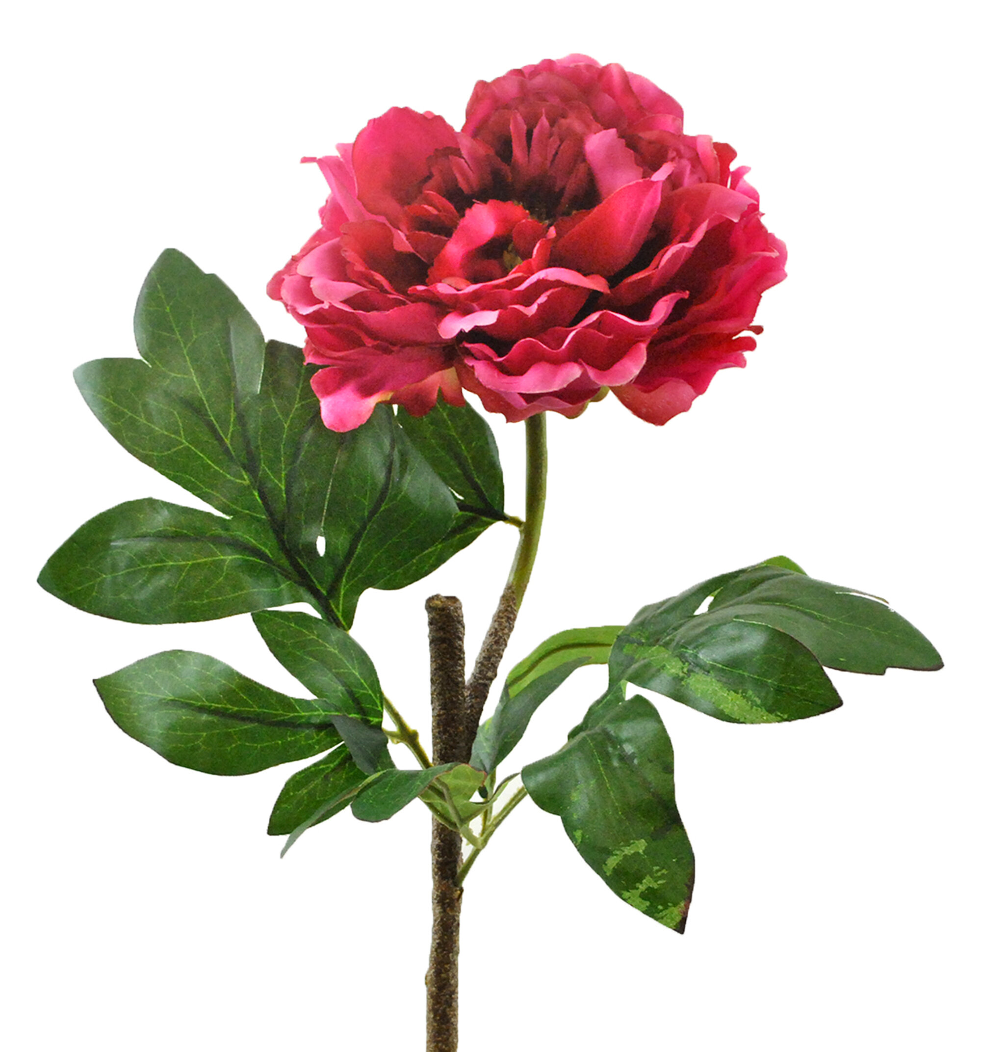 Primrue Peony Flower Stem Reviews Wayfair