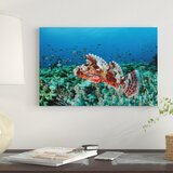 a-venomous-scorpionfish-on-a-coral-reef-in-komodo-national-park-indonesia-photographic-print-on-canvas