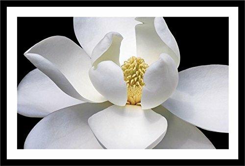 Latitude run white magnolia flower closeup framed photograph print white magnolia flower closeup framed photograph print mightylinksfo