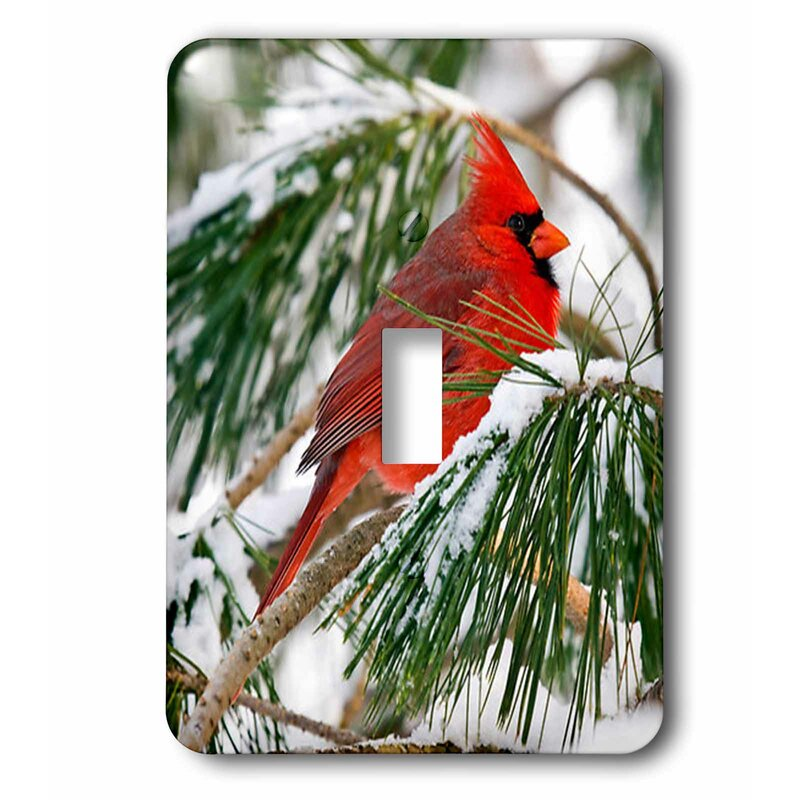 3drose Cardinal Perched In Snowy Pine Tree 1 Gang Toggle Light Switch Wall Plate Wayfair