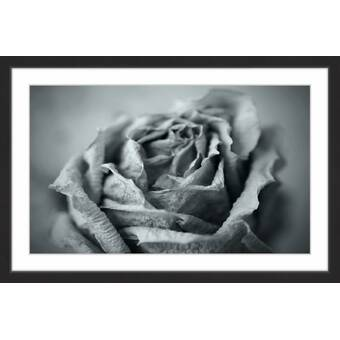 Marmont Hill Classic Rose In Gray Framed Painting Print Wayfair