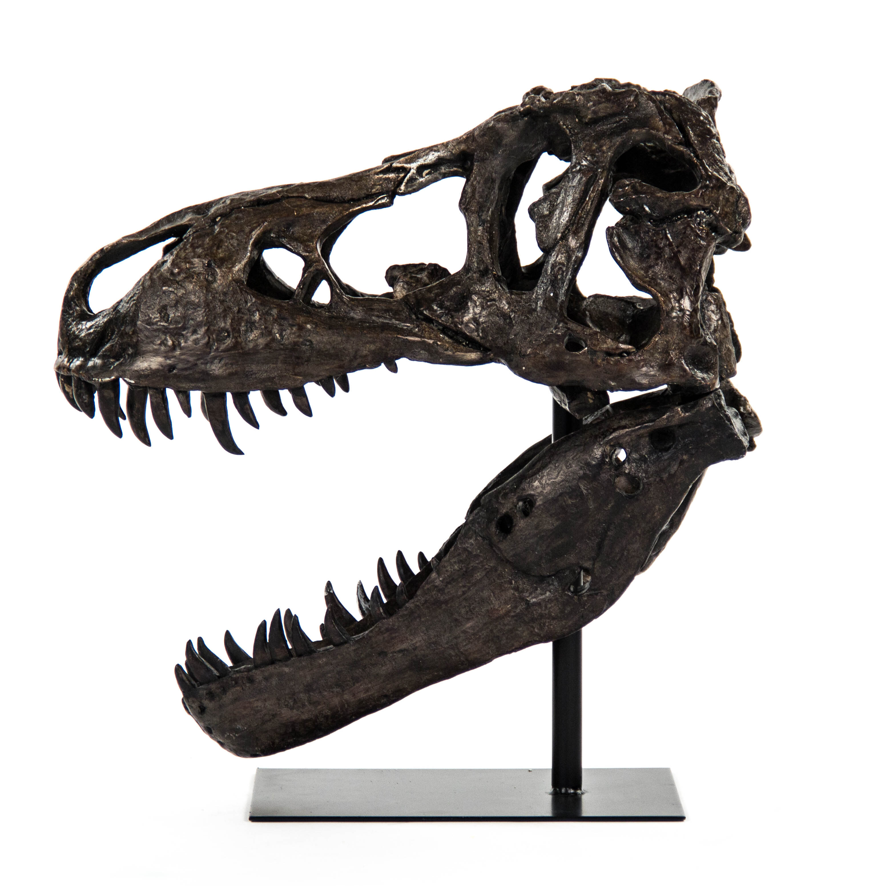 Zentique Dinosaur Skull With Base Wall D 233 Cor Wayfair