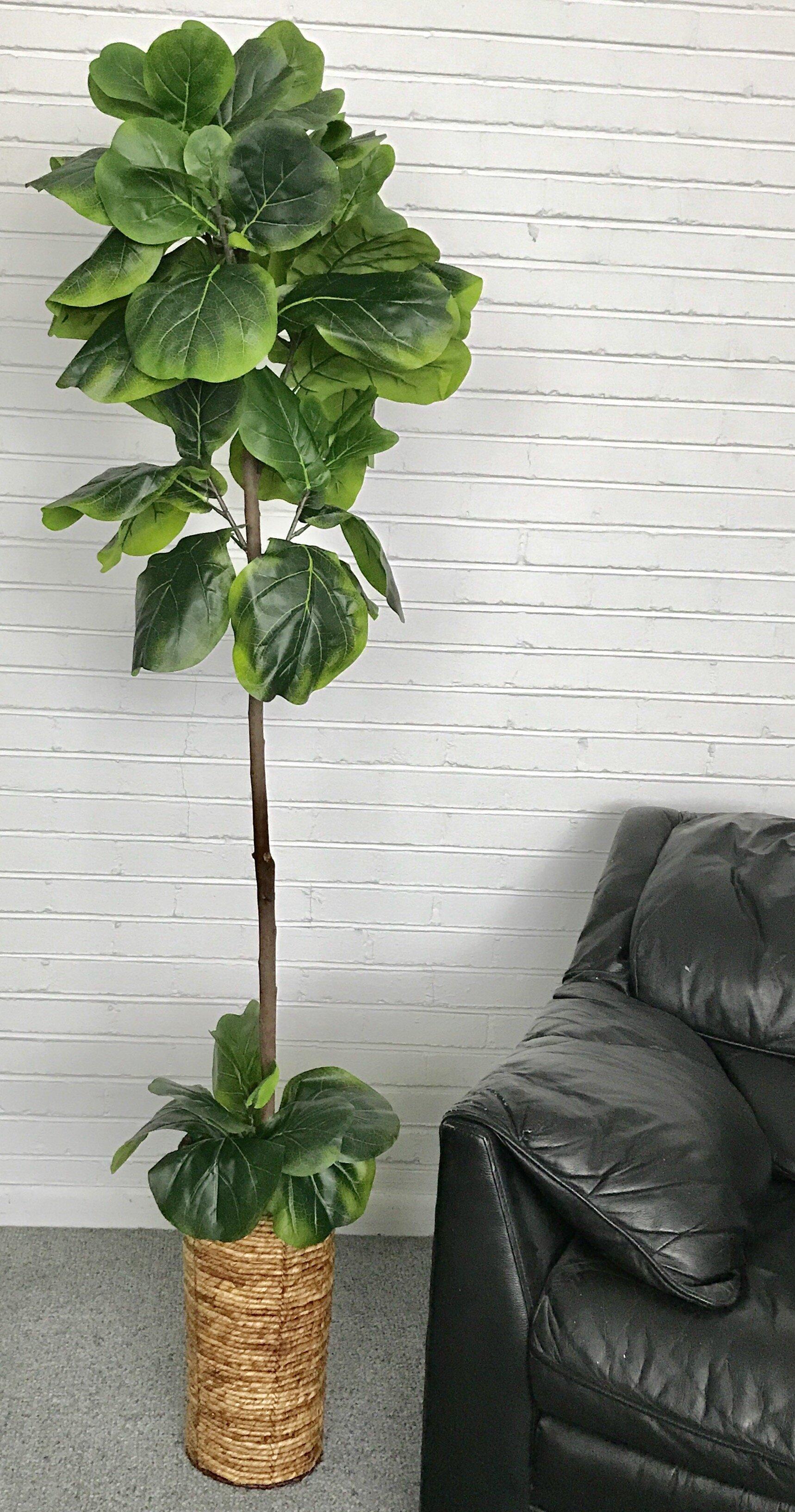 Mistana Fiddle Leaf Fig Tree In Basket Reviews Wayfair