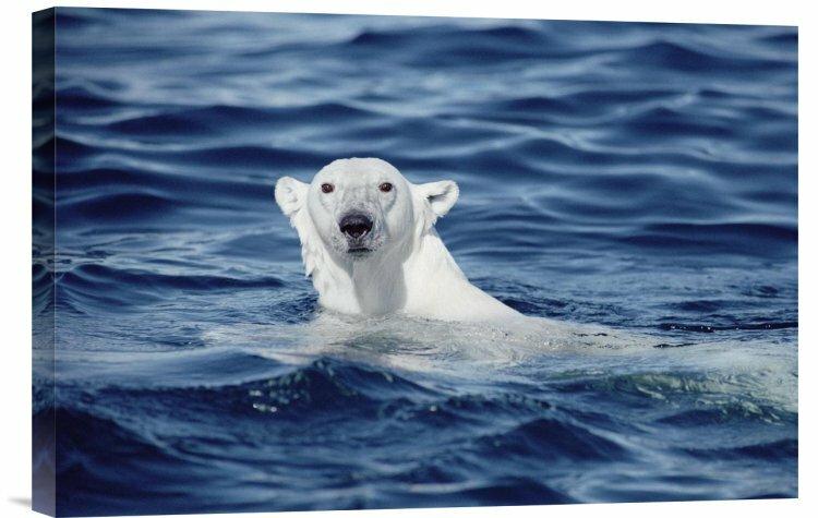 East Urban Home Polar Bear Swimming Baffin Island
