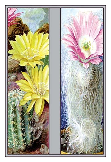 Buyenlarge Flower Cactus And Flower2 Piece Graphic Art Set Wayfair