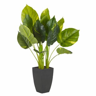 Foliage Plant In Plant By The Seasonal Aisle