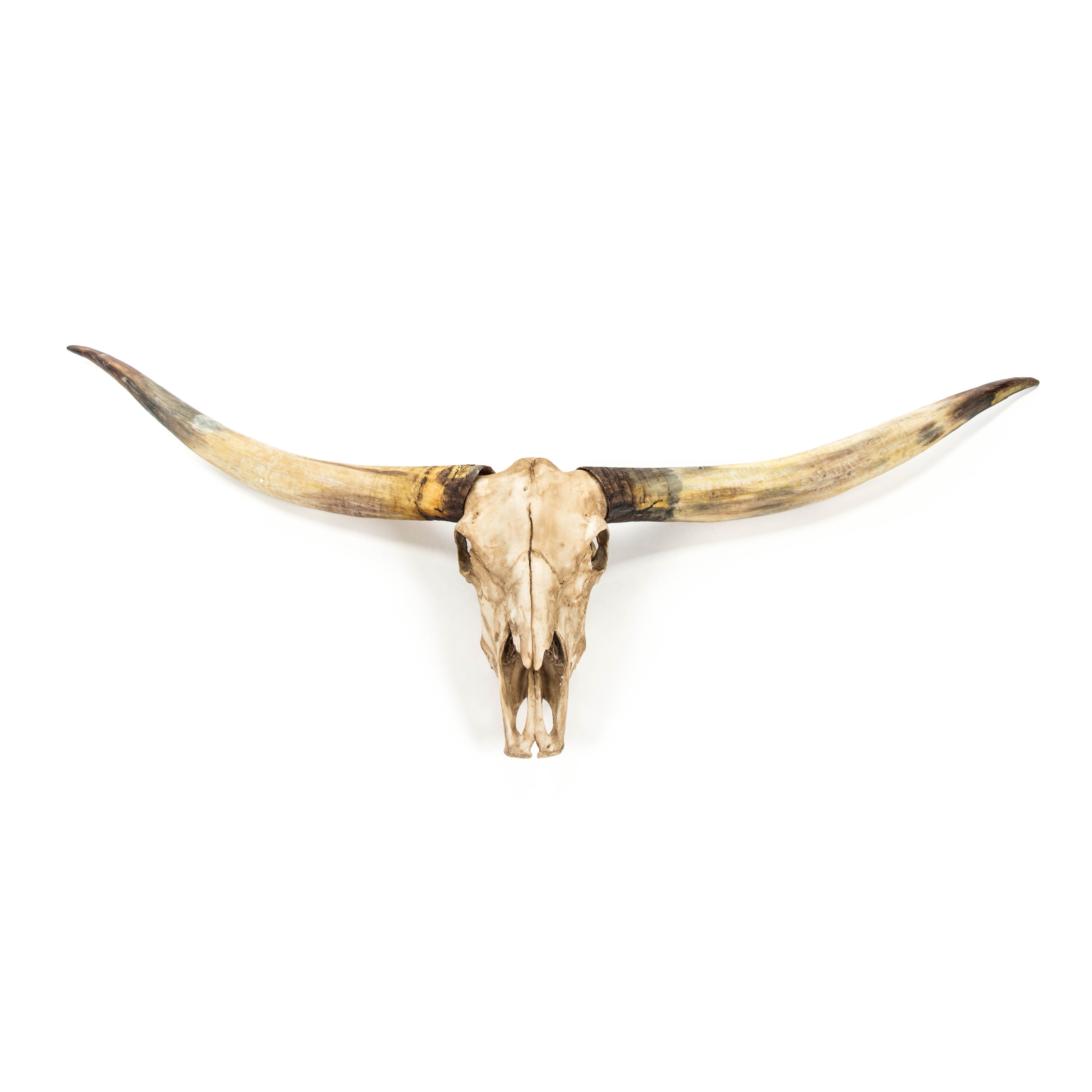 Hand Painted Genuine Bull Skull Black Geometric