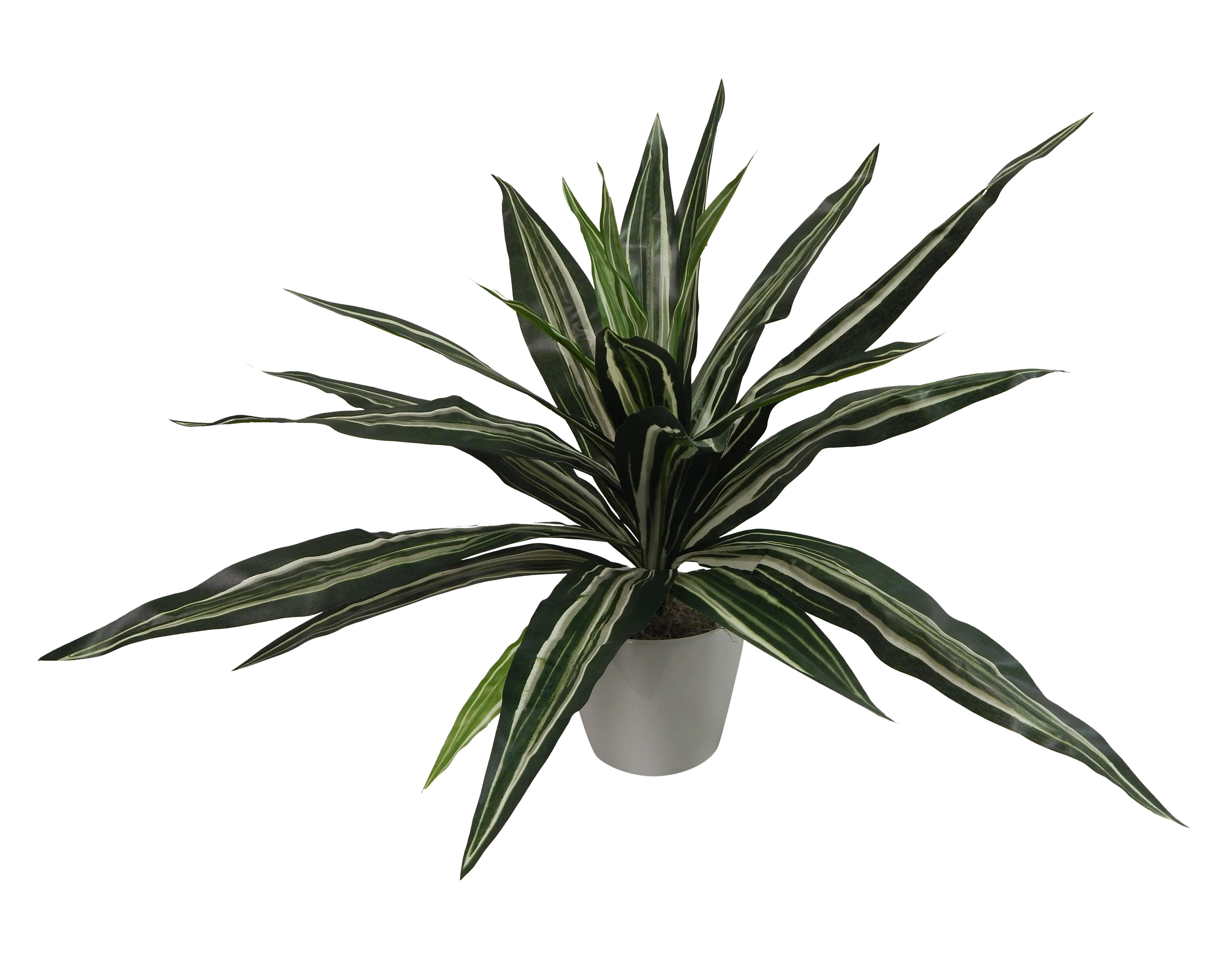 Mistana Modern Dracaena Plant In