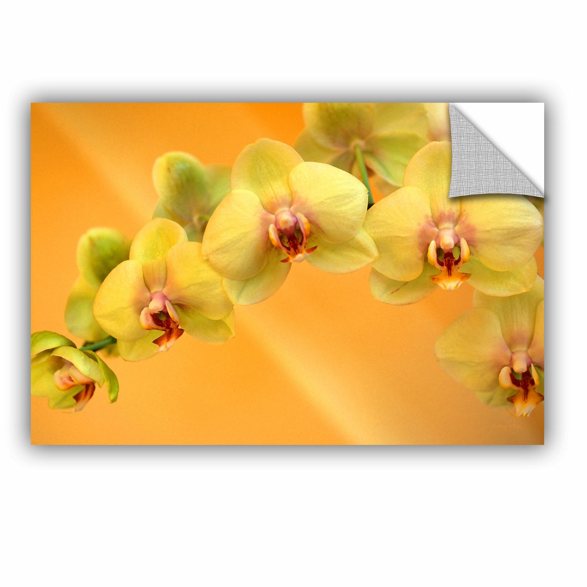 Artwall Yellow Phalaenopsis By Kathy Yates Photographic Print Removable Wall Decal Wayfair
