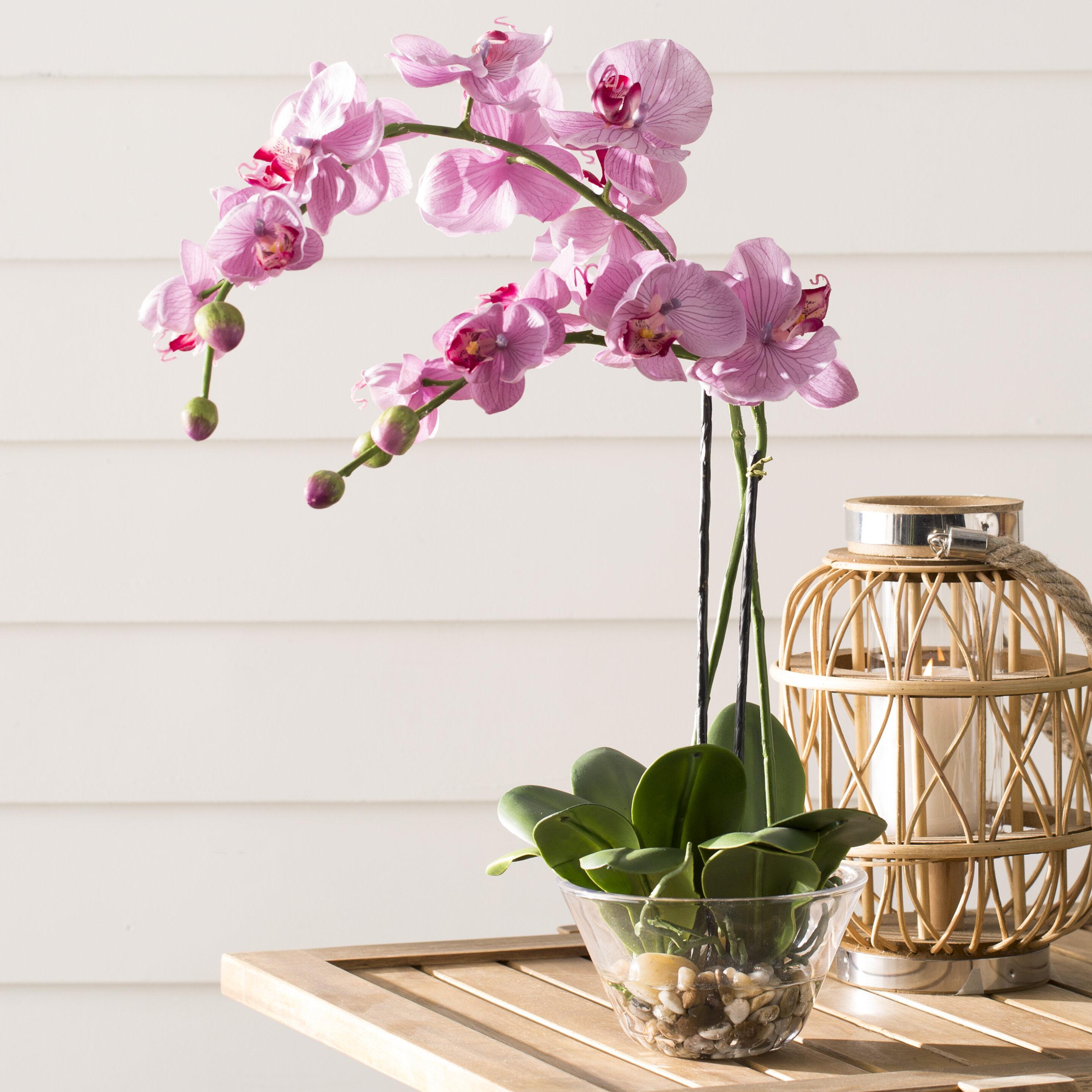 Orchids Floral Arrangement In Vase Reviews Joss Main
