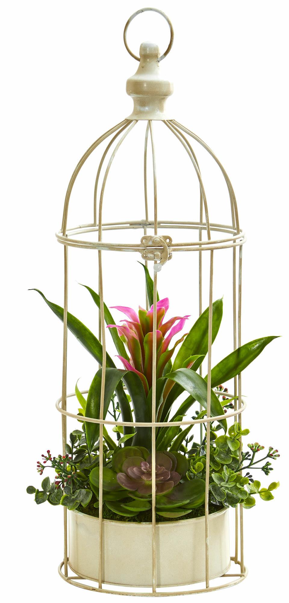 Ophelia Co Bromeliad Arrangement Hanging Succulent Plant In Bird Cage Reviews Wayfair