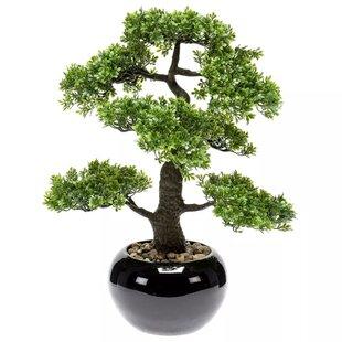 Desktop Bonsai Tree in Pot by Lynton Garden