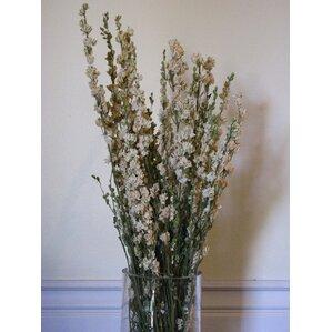 dried larkspur floral