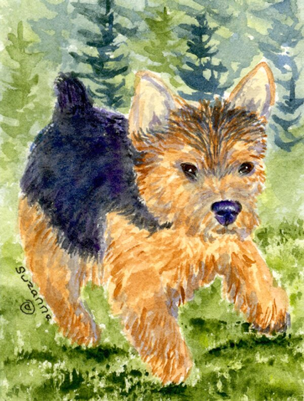 Caroline S Treasures Norwich Terrier 2 Sided Polyester 40 X 28 In House Flag Wayfair